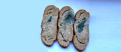 Состав хлеба: влияние на длительность срока хранения