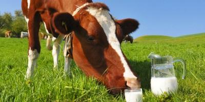 Альтернатива коровьему молоку