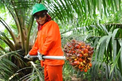 Мифы о масле пальм