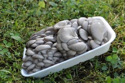 Правила хранения свежих грибов