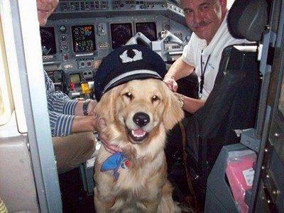 Кого чаще всего берут в самолет