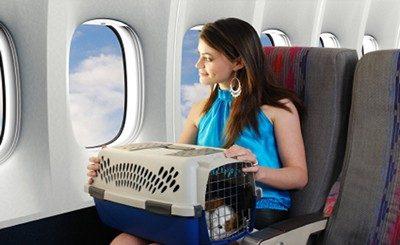 Животное на борту самолета