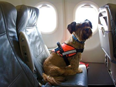 Каких животных разрешают перевозить в разных авиакомпаниях?