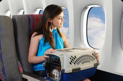 Придется ли сдавать животное в багаж?